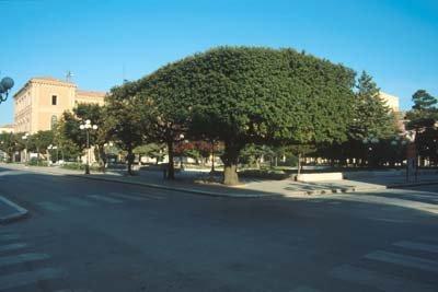 Il leccio la quercia sempreverde che ci accompagna dall for Quercia sempreverde