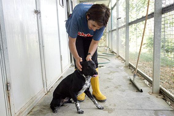 Ferie calano gli abbandoni dei cani ma sono tanti i - Portare il cane al canile ...