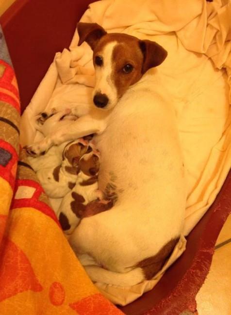 Pepita e la carica dei quattro cuccioli cronache maceratesi