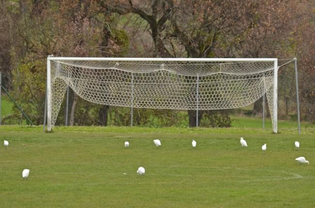Aironi giocano a calcio a urbisaglia cronache maceratesi for Risparmio casa corridonia
