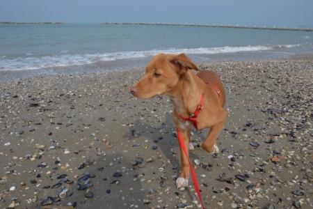cane-spiaggia-2-450x300