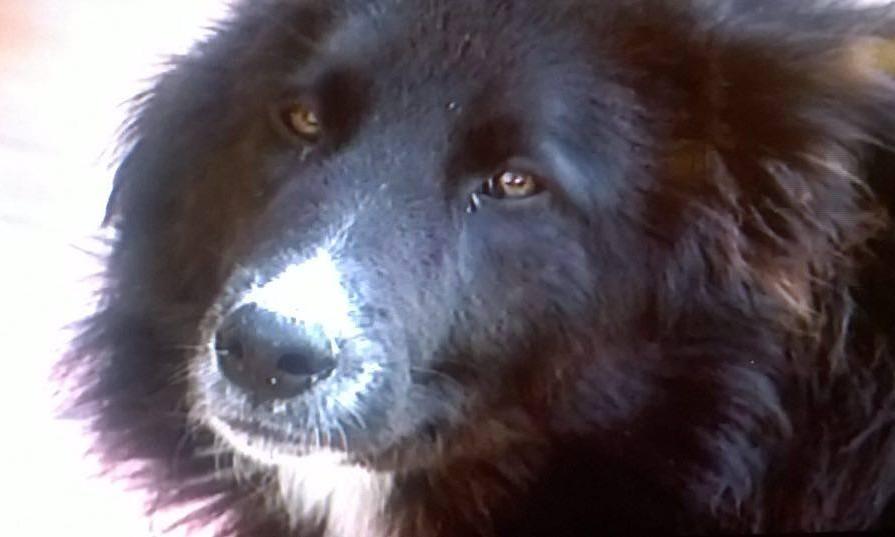 Cane sbranato dai lupi cronache maceratesi for Ardeatina arredamenti di lupi gabriella