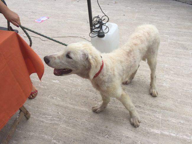 San giuliano tre cagnolini trovano una nuova casa for In cerca di una nuova casa