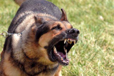 Risultati immagini per cani feroci
