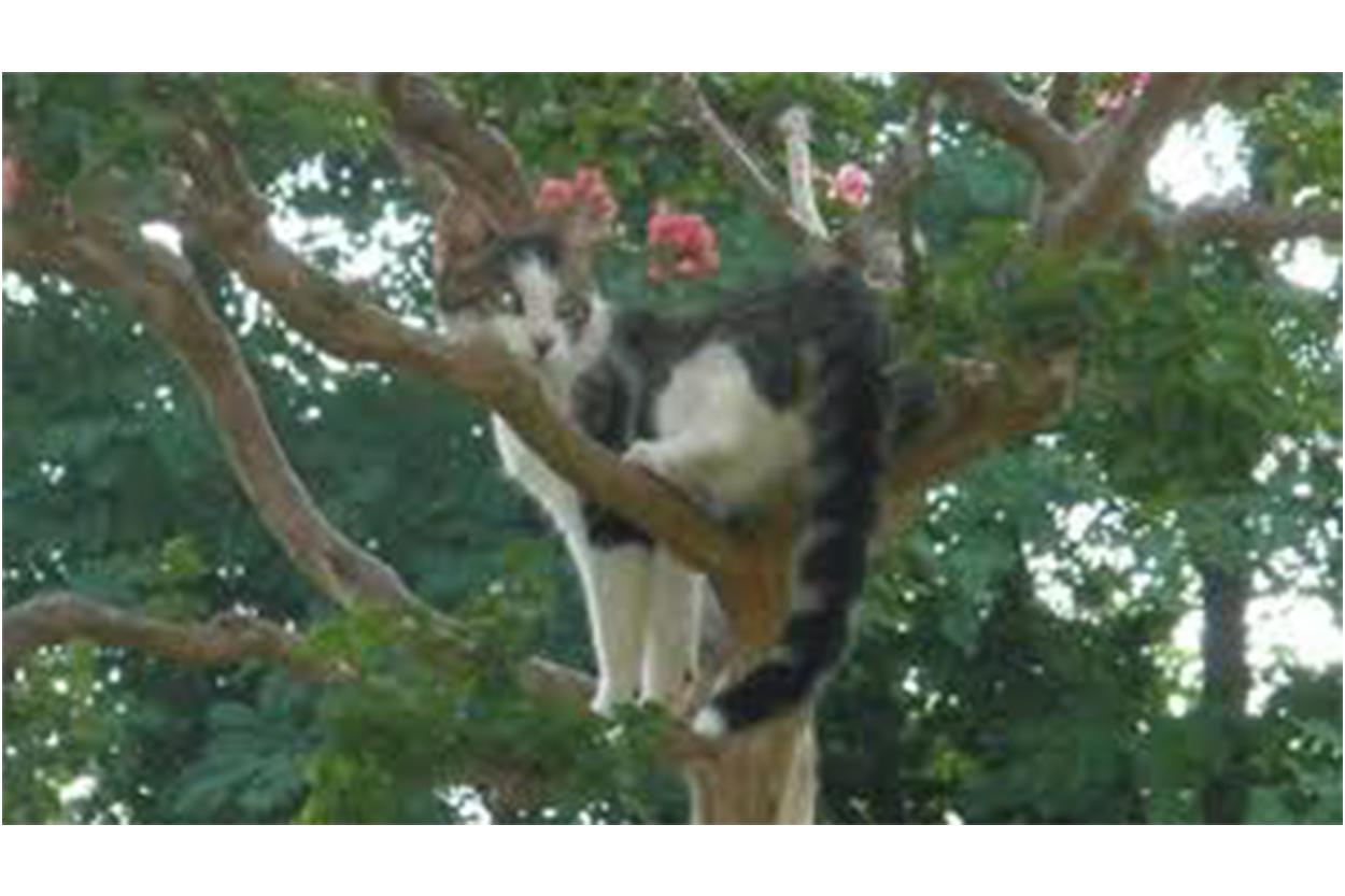 Gatto per 4 giorni su un albero salvato dai vigili del - Gatto solo in casa per 15 giorni ...