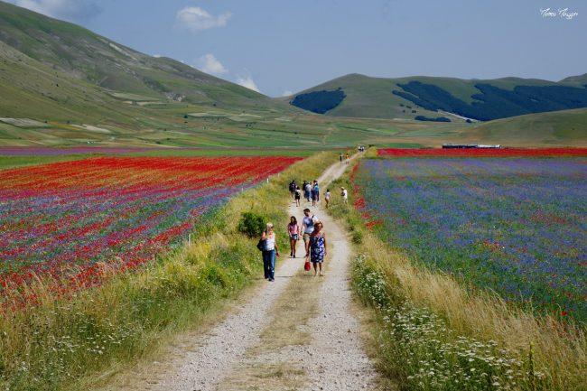 fioritura-castelluccio-matteo-mazzoni-3-650x433