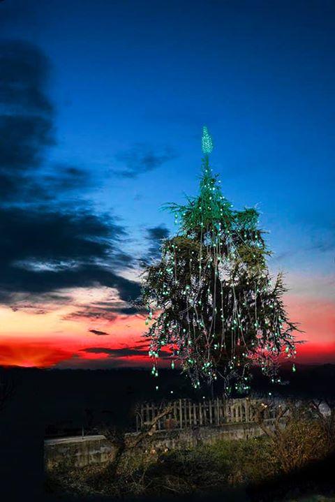 Albero Di Natale Java.Quattrocento Bottiglie Di Amaro Per Decorare L Albero Di Natale