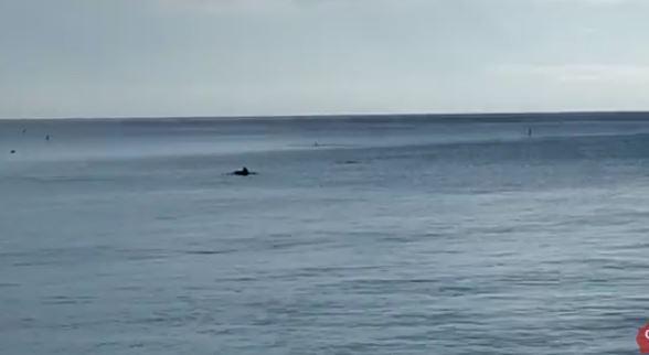 delfini-civitanova1