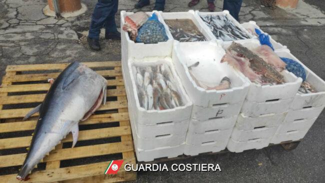 pesce_sequestrato_capitaneria-1-650x366