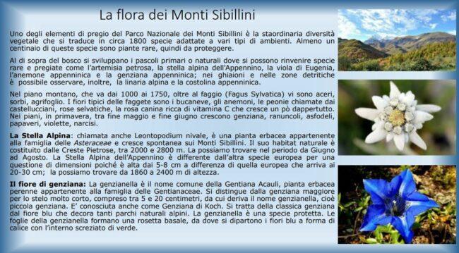 monti_sibillini_topolino2-650x359