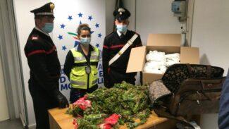 Roma-arresti-traffico-droga-aeroporto